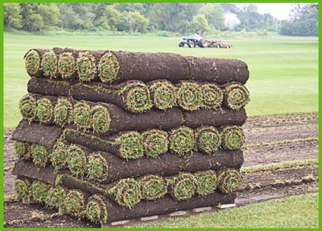 turf supply