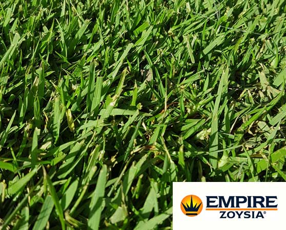 Zoysia empire turf sunshine coast
