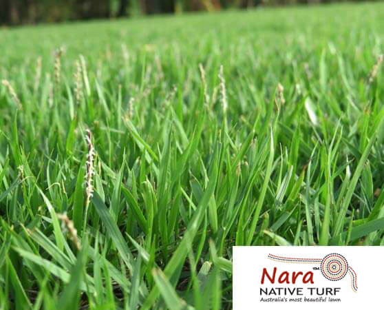 Nara Turf Sunshine coast