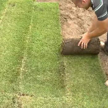 How To Lay Turf Properly