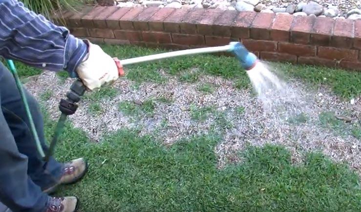 Lawn Grub And Disease Control