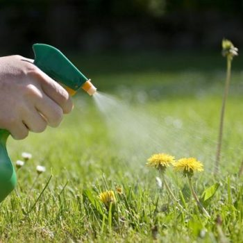 Weed Control Fact