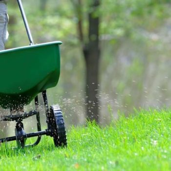 fertilising your lawn