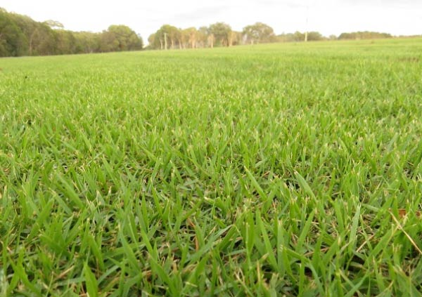 Sunshine coast nara turf