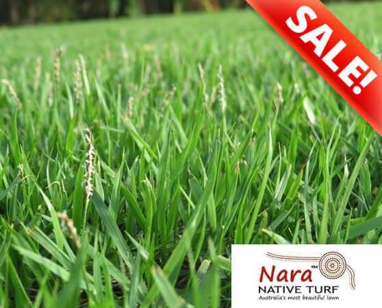 nara native turf sale