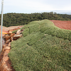 Studies prove Nara™ Native Turf is ideal for Australian landscapes