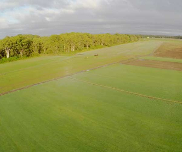 Turf is a Positive Sequester of Carbon