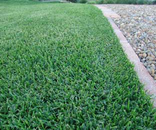 Turf is the Lowest Cost Ground Cover